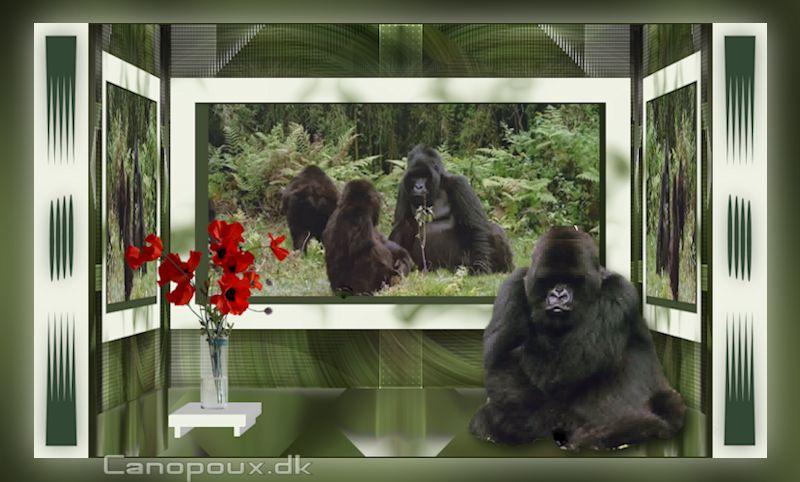 Gorilla-zita5-800